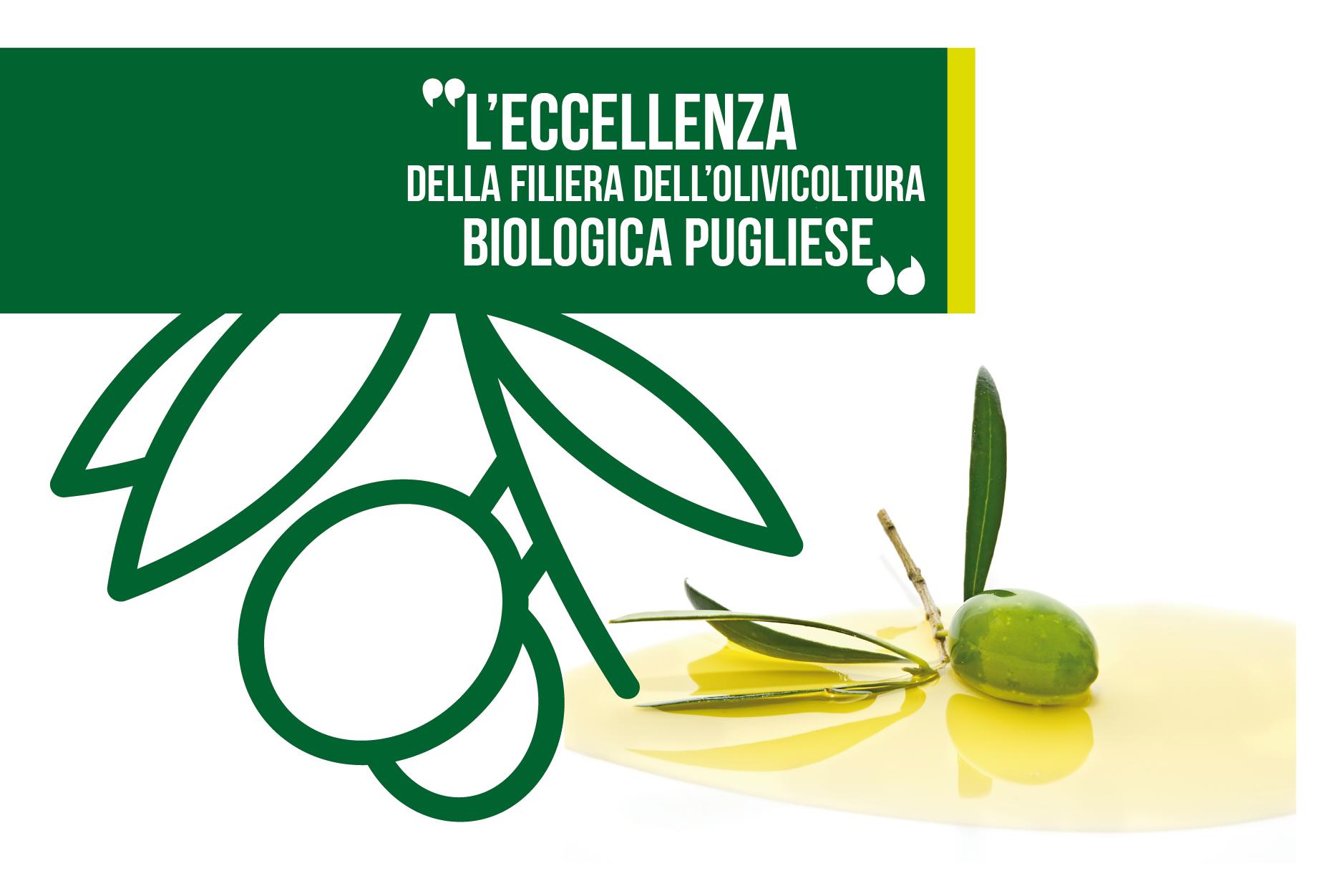 """Progetto """"OLIO BIO"""", una serie di iniziative per la promozione dell'eccellenza della filiera dell'olivicoltura biologica pugliese"""